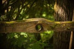 Ενδιαφέρουσα ξύλινη μορφή Στοκ Εικόνα