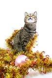 ενδιαφερόμενο γάτα tinsel Στοκ εικόνα με δικαίωμα ελεύθερης χρήσης