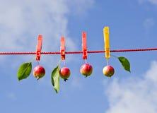 ενδύματα τέσσερα μήλων γρ&alpha Στοκ φωτογραφία με δικαίωμα ελεύθερης χρήσης