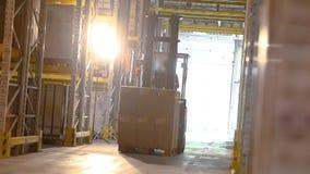 Ενεργός εργασία των forklifts σε μια μεγάλη σύγχρονη αποθήκη εμπορευμάτων, βιομηχανικό εσωτερικό, εργασία των forklifts σε μια απ φιλμ μικρού μήκους