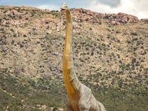 Ενθουσιασμός Brachiosaurus Στοκ φωτογραφία με δικαίωμα ελεύθερης χρήσης