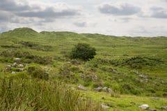 Ενιαία δέντρο και βουνά στον τρόπο ιρλανδικών αγελάδων Στοκ Φωτογραφία