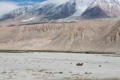 Ενιαία καμήλα στο απέραντο τοπίο βουνών Στοκ φωτογραφία με δικαίωμα ελεύθερης χρήσης