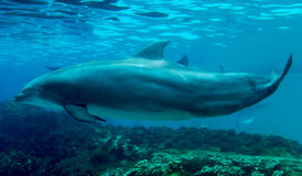 ενιαία κολύμβηση δελφινιών στοκ φωτογραφία