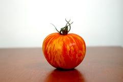 ενιαία ντομάτα φωτογραφιώ&n Στοκ Φωτογραφία