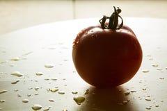 ενιαία ντομάτα Στοκ φωτογραφία με δικαίωμα ελεύθερης χρήσης