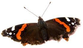 Ενιαία πεταλούδα μοναρχών που απομονώνεται στο άσπρο υπόβαθρο στοκ φωτογραφίες