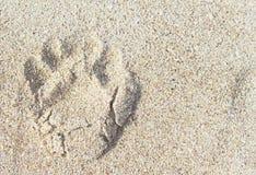 Ενιαία τυπωμένη ύλη ποδιών σκυλιών στην άμμο Στοκ φωτογραφία με δικαίωμα ελεύθερης χρήσης