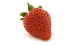 ενιαία φράουλα Στοκ φωτογραφία με δικαίωμα ελεύθερης χρήσης