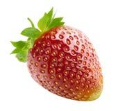 Ενιαία φράουλα που απομονώνεται στο άσπρο υπόβαθρο Στοκ Φωτογραφίες