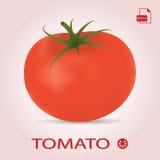 Ενιαία φρέσκια ώριμη ντομάτα σε ένα υπόβαθρο Ελεύθερη απεικόνιση δικαιώματος