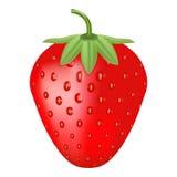 Ενιαία φρέσκια ώριμη φράουλα που απομονώνεται σε ένα άσπρο υπόβαθρο διανυσματική απεικόνιση