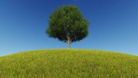 Ενιαίος αέρας χλόης ανάπτυξης δέντρων φιλμ μικρού μήκους