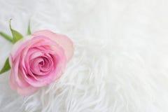 Ενιαίος αυξήθηκε σε μια ρομαντική ρύθμιση Στοκ φωτογραφία με δικαίωμα ελεύθερης χρήσης