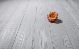 Ενιαίος αυξήθηκε στην άσπρη ξύλινη επιφάνεια στοκ εικόνες