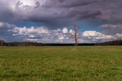 Ενιαίος κανένα δέντρο φύλλων στον τομέα Σκοτεινά σύννεφα ανωτέρω Στοκ Εικόνες