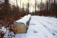 Ενιαίος κορμός δέντρων στο δασικό ίχνος με το χιόνι Στοκ φωτογραφία με δικαίωμα ελεύθερης χρήσης