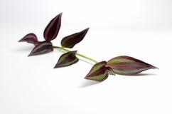 Ενιαίος μίσχος φυτού Στοκ εικόνα με δικαίωμα ελεύθερης χρήσης
