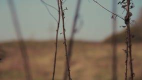 Ενιαίος σταυρός στον τομέα χλόης φιλμ μικρού μήκους