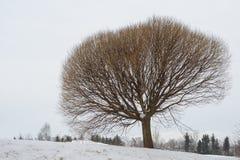 ενιαίος χειμώνας δέντρων Στοκ Φωτογραφία