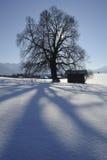 ενιαίος χειμώνας δέντρων Στοκ εικόνες με δικαίωμα ελεύθερης χρήσης