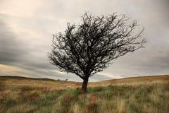 ενιαίος χειμώνας δέντρων Στοκ φωτογραφίες με δικαίωμα ελεύθερης χρήσης