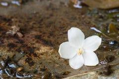 Ενιαίο άγριο λουλούδι δαμάσκηνων νερού στο βρώμικο οξυδωμένο χάλυβα Στοκ φωτογραφία με δικαίωμα ελεύθερης χρήσης