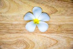 Ενιαίο άσπρο λουλούδι plumeria στο ξύλινο backgroud Στοκ Φωτογραφία