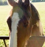 Ενιαίο άλογο στην ηλιοφάνεια Στοκ Φωτογραφίες