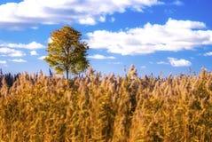 ενιαίο δέντρο πεδίων στοκ εικόνα με δικαίωμα ελεύθερης χρήσης