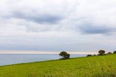 Ενιαίο δέντρο σε έναν απότομο βράχο Στοκ εικόνες με δικαίωμα ελεύθερης χρήσης