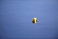 Ενιαίο απομονωμένο επιπλέον σώμα αστακών στα ήρεμα νερά της Νέας Αγγλίας Στοκ Εικόνες