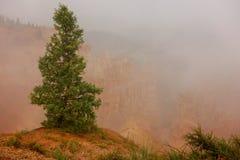 Ενιαίο απόμερο δέντρο πεύκων στην ομίχλη στο εθνικό πάρκο φαραγγιών bryce Στοκ εικόνα με δικαίωμα ελεύθερης χρήσης