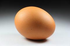 Ενιαίο αυγό κοτόπουλου στο υπόβαθρο Στοκ Εικόνα
