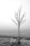 ενιαίο δέντρο ομίχλης Στοκ φωτογραφία με δικαίωμα ελεύθερης χρήσης