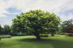 Ενιαίο δέντρο στον πράσινο τομέα Στοκ φωτογραφία με δικαίωμα ελεύθερης χρήσης