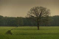 Ενιαίο δέντρο στον τομέα στοκ εικόνα