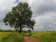 ενιαίο δέντρο στοκ εικόνες με δικαίωμα ελεύθερης χρήσης