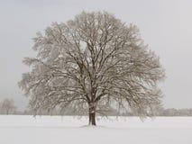 ενιαίο δέντρο Στοκ εικόνα με δικαίωμα ελεύθερης χρήσης