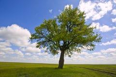 ενιαίο δέντρο Στοκ Φωτογραφίες