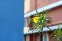 Ενιαίο κίτρινο λουλούδι με το μπλε ουρανό στοκ εικόνα