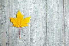 Ενιαίο κίτρινο φύλλο σφενδάμου σε ένα γκρίζο ξύλινο υπόβαθρο Στοκ φωτογραφία με δικαίωμα ελεύθερης χρήσης