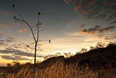 Ενιαίο καψαλισμένο δέντρο σε Nourlangie badlands στο εθνικό πάρκο Kakadu Στοκ Εικόνες