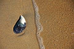 Ενιαίο κοχύλι στην άμμο Στοκ Φωτογραφία