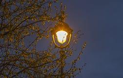 Ενιαίο ντεμοντέ φανάρι στους κλάδους ενός δέντρου Στοκ φωτογραφία με δικαίωμα ελεύθερης χρήσης
