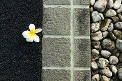Ενιαίο λουλούδι Στοκ Εικόνα