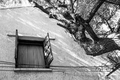 Ενιαίο παράθυρο δίπλα στο τρομακτικό δέντρο Στοκ Φωτογραφίες