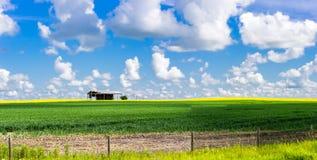 Ενιαίο παλαιό υπόστεγο στη μέση του γεωργικού τομέα Στοκ Φωτογραφίες
