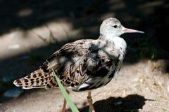Ενιαίο πουλί το καλοκαίρι Στοκ Φωτογραφίες