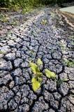Ενιαίο πράσινο φυτό στο ξηρό έδαφος Στοκ φωτογραφία με δικαίωμα ελεύθερης χρήσης